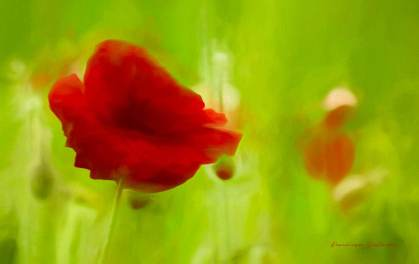 Fleurs du Jardin3