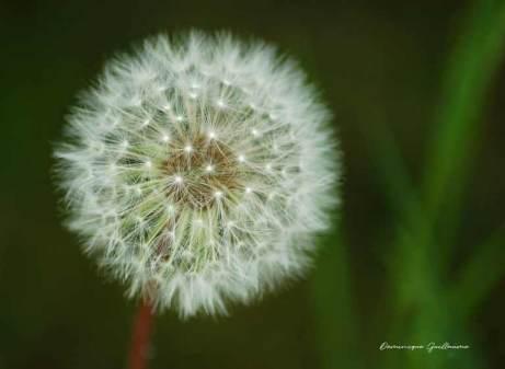 Fleurs du Jardin4