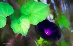 Fleurs du Jardin5