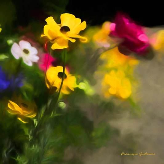 Fleurs du Jardin1